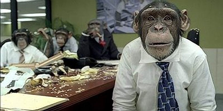 Parish Council Replaced With Monkeys, Nobody Notices